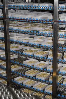 Разрыхлители системы пищевой промышленности (6)