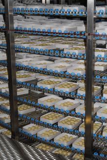 Equipamento de fermentação produtos de padaria (6)