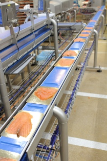 interroll-mototamburo-nel-food-processing-fish