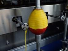 pelatrice-mango-3